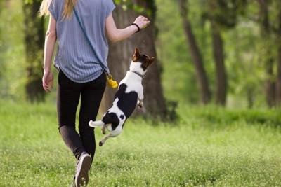 ジャンプする犬と女性