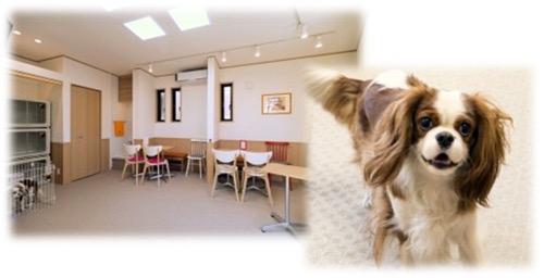 わんにゃんCafe&Pet Hotel Neo Neoの写真