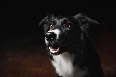 暗い場所にいる犬