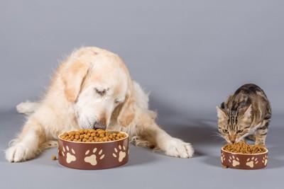 フードを食べる犬と猫