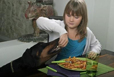 犬にパスタを食べさせる少女