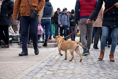 人の多い場所を飼い主さんと歩く犬の後ろ姿