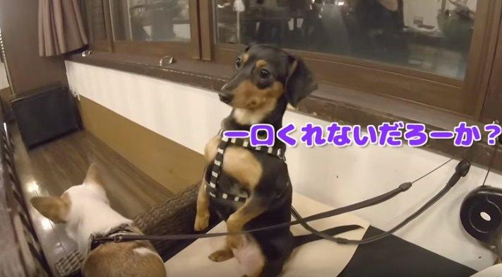 夕飯を食べる犬
