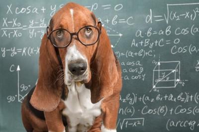 文字の書かれた黒板と眼鏡をかけた犬