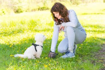 ウンチをとる女性とそれを見る犬