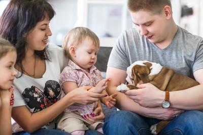 家族に囲まれ子犬