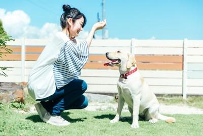 庭で遊ぶ女性と犬