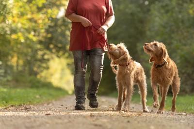 2匹の犬と散歩をする女性