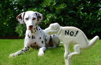 犬のウンチNOプレートとダルメシアン