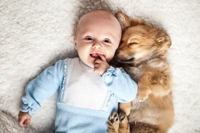 赤ちゃんに寄り添って寝る犬