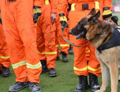 訓練中の災害救助犬
