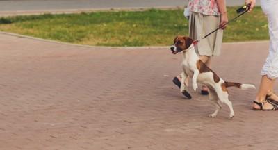 散歩中に吠える犬
