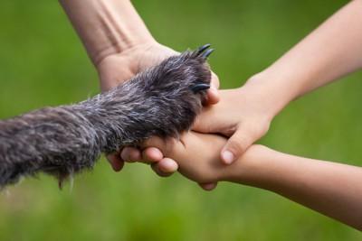 手を重ねる人と犬