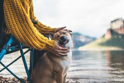 女性に撫でられる柴犬