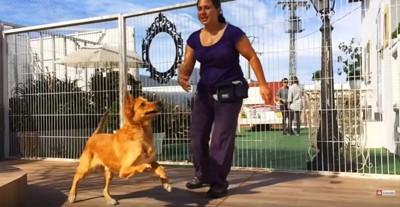 人と遊ぶ犬