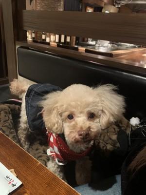 カフェの犬