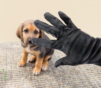 子犬を盗もうとする手のイメージ