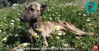 花畑でくつろぐ犬
