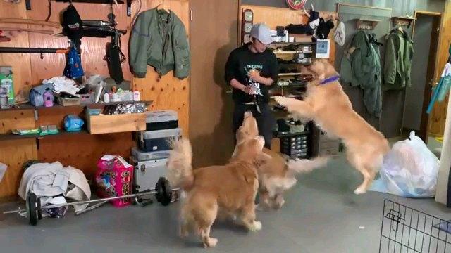 立ち上がる犬