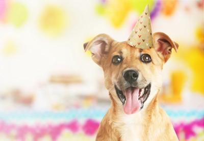 三角の帽子をかぶったパーティー中の犬
