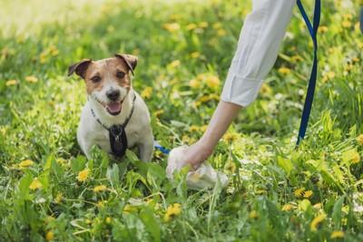 犬とウンチを片付ける手