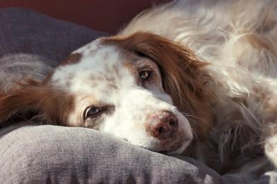 苦しそうな犬