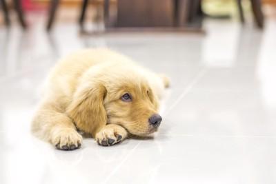 床でくつろぐ犬