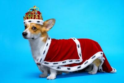 王様の服を着た犬