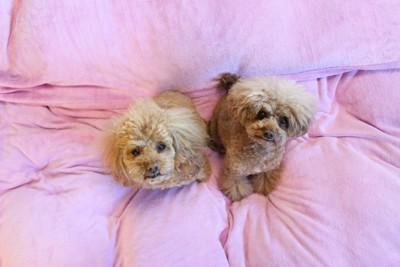 見上げる二匹の犬
