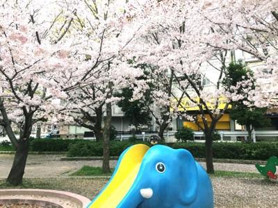 桜と遊具と犬