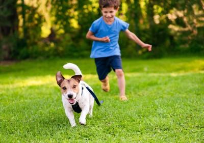 男の子に追いかけられる犬