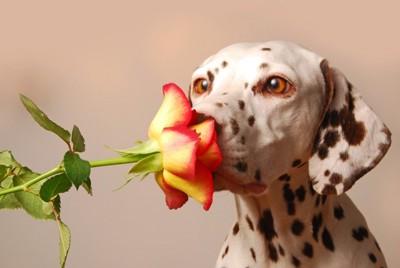 花の香りをかぐ犬