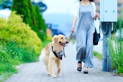 飼い主と散歩する犬