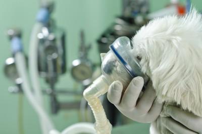 呼吸器と犬 31905182