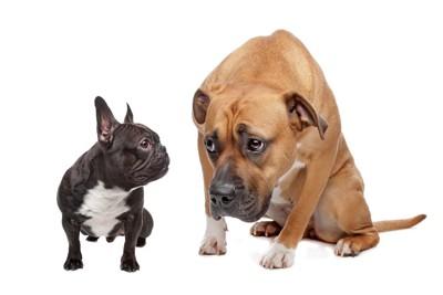 しょんぼりした犬とそれを見つめる犬
