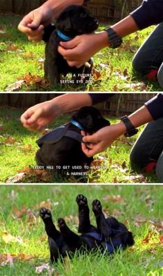 紺色のベストを着た黒い子犬の写真