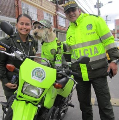 警察官に囲まれている犬