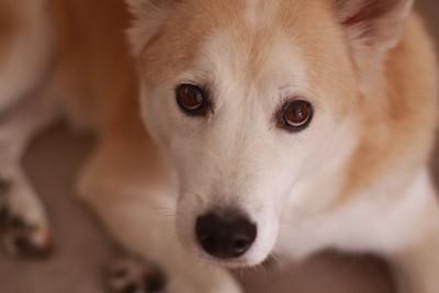 こちらをじっと見つめる犬