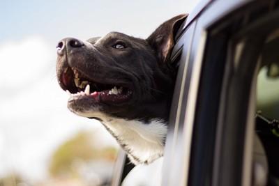police_dog2