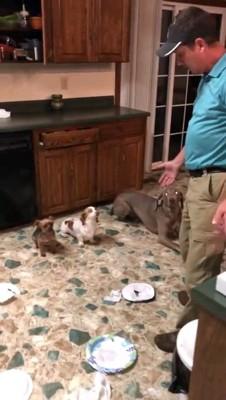 伏せする三匹の犬