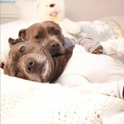 寝転びながら、迷惑そうに見る犬たち