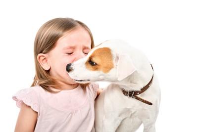 泣いている女の子の顔を舐める犬