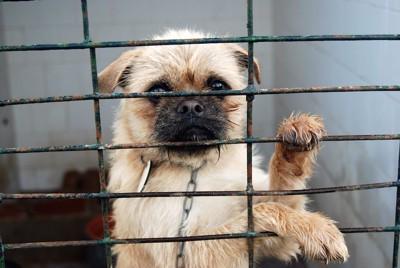 檻の中からこっちを見つめる犬
