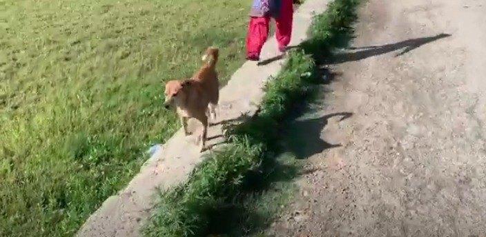 飼い主の散歩姿