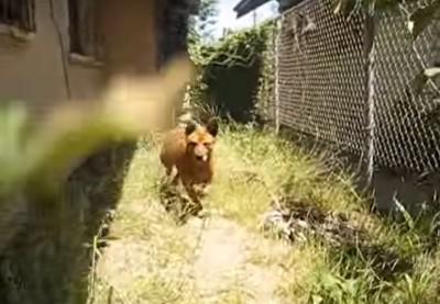 向かってくる犬