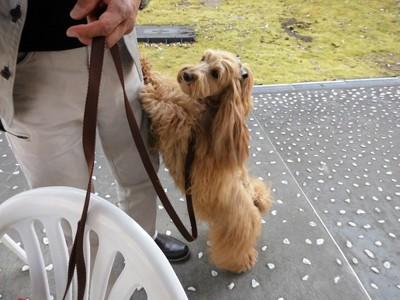 飼い主に寄りかかる犬
