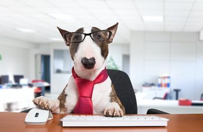 ビジネスマンの格好をした犬