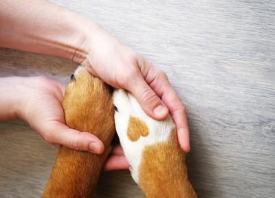 犬の前足を握る女性の手