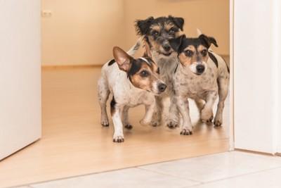 室内にいる複数の犬