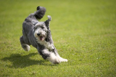 草原を走り回る犬